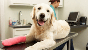 MetLife Looks Forward to Partnering with PetFirst