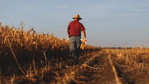 Kansas Shows Mental Health Support to Agriculturists Via a New Website