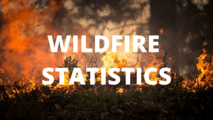 24+ Blazing Wildfire Statistics for the US and Abroad