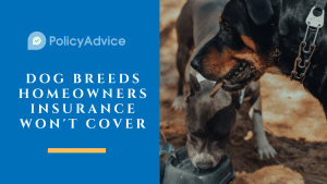 Dog Breeds Homeowners Insurance Won't Cover